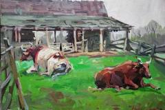 English Cows