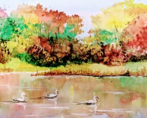 Swans, Watercolor